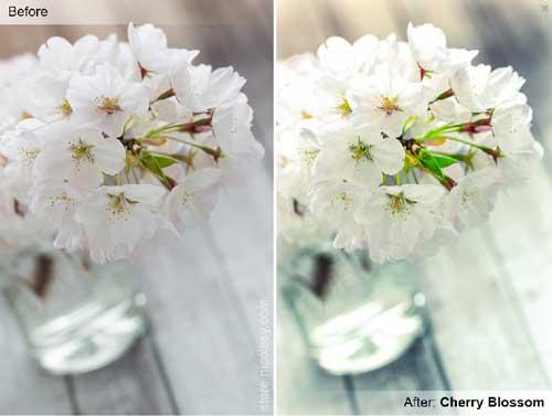 Preset Lightroom gratuitos para tus fotografías: Cherry Blossom